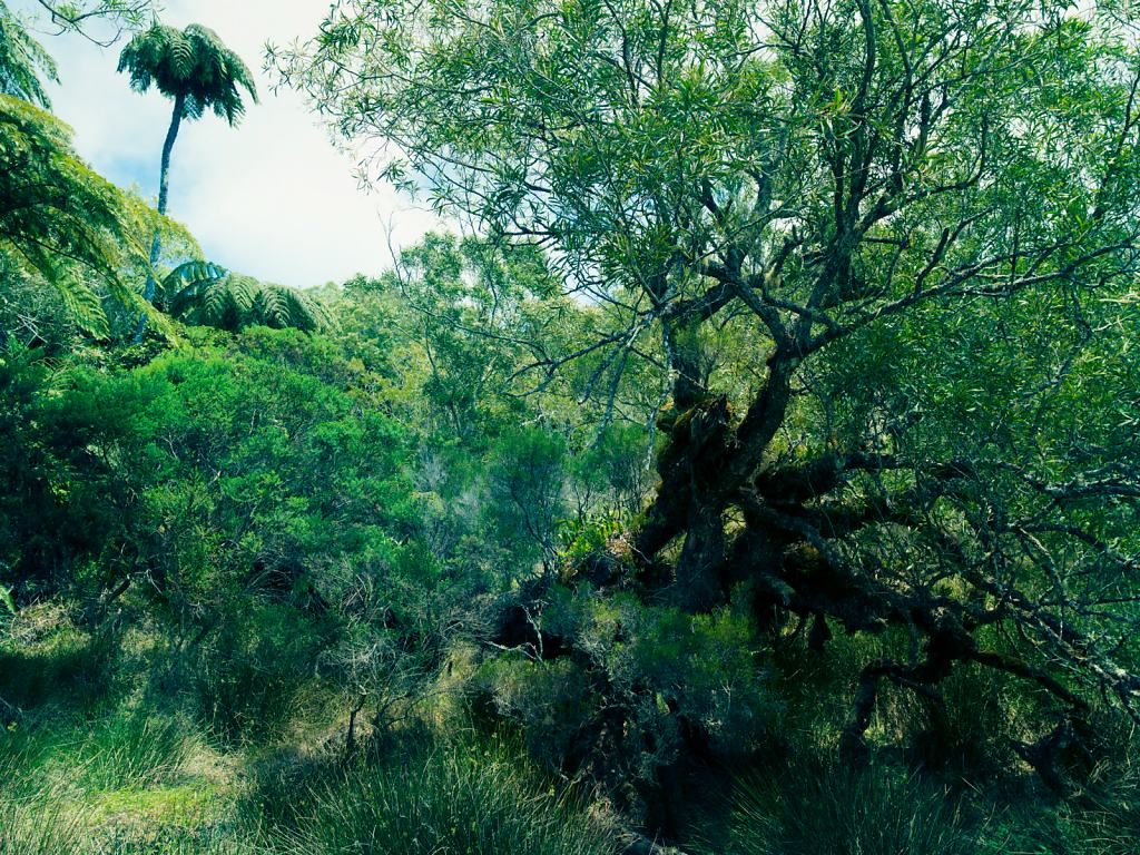 Daniel-Hager-Landscape-042.jpg