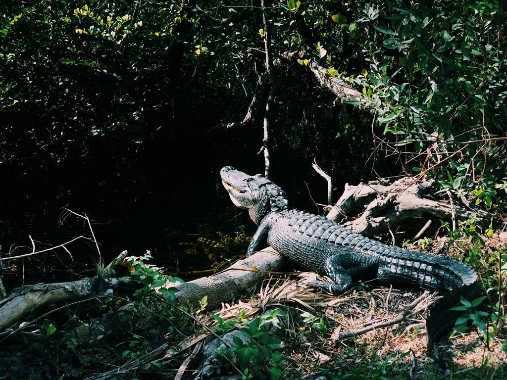 Daniel-Hager-Photography-Film-Zurich-Switzerland-Making-of-Alligator.jpg