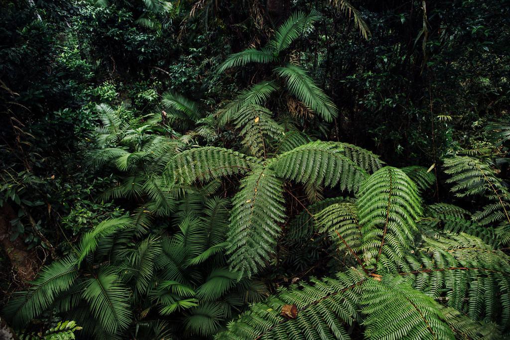 Daniel-Hager-Photography-Film-Zurich-Switzerland-2019-HKG-AUSTRALIA-6661.jpg