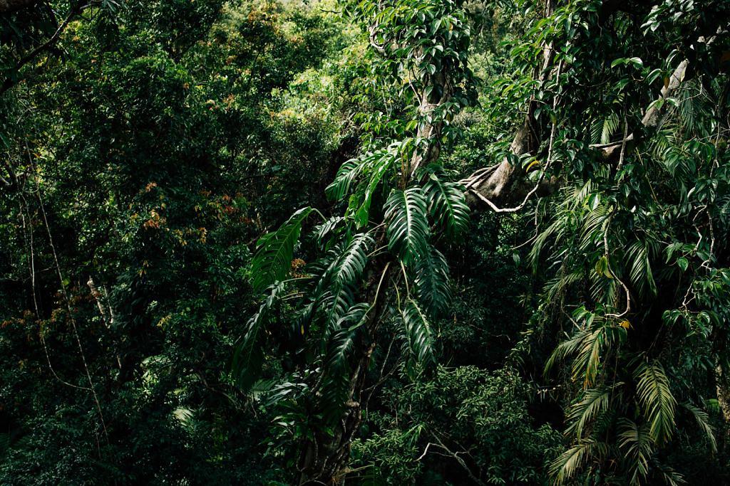 Daniel-Hager-Photography-Film-Zurich-Switzerland-2019-HKG-AUSTRALIA-6815.jpg